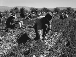 img_fieldworkers